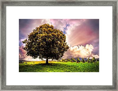 Tree In The Vineyard Framed Print by Debra and Dave Vanderlaan