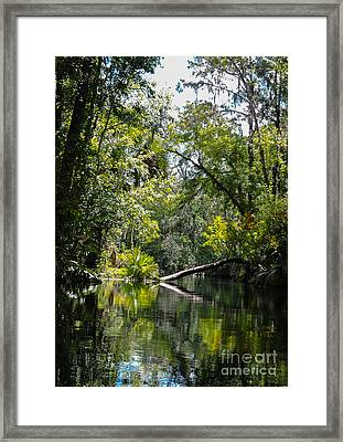 Tree In The Way Framed Print
