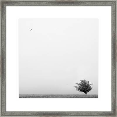 Tree In The Wind Framed Print by Mike McGlothlen
