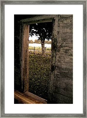 Tree In The Window Framed Print