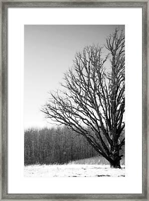 Tree In Winter 2 Framed Print
