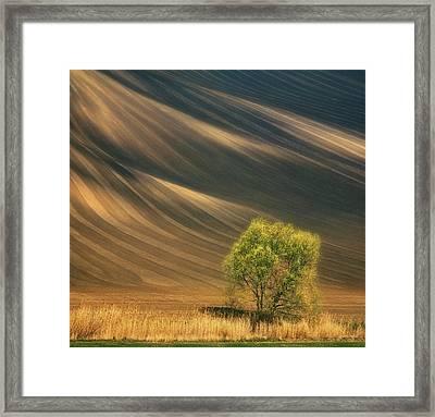 Tree... Framed Print