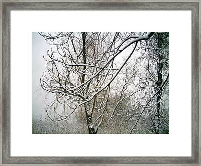 Framed Print featuring the photograph Tree Lace by Desline Vitto