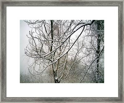 Tree Lace Framed Print by Desline Vitto
