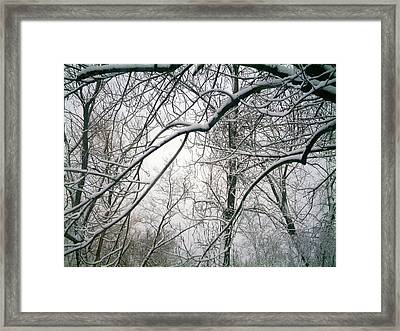 Framed Print featuring the photograph Tree Lace Too by Desline Vitto