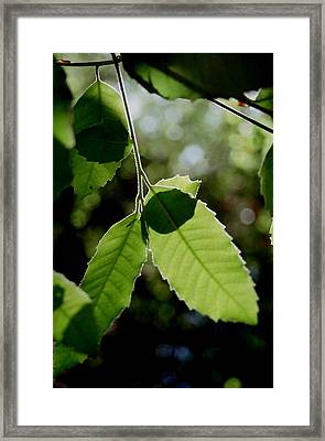 Tree Leaves Framed Print by Alfredo Martinez