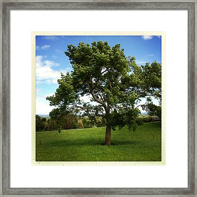 Tree Framed Print by Les Cunliffe