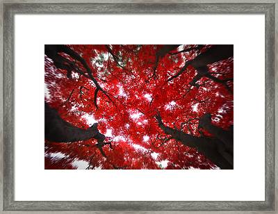Framed Print featuring the photograph Tree Light - Maple Leaves Fall Autumn Red by Jon Holiday