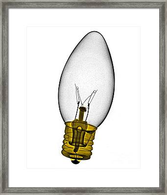 Tree Light Bulb X-ray Framed Print by Bert Myers