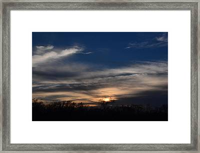 Tree Light Framed Print by Kelly Kitchens