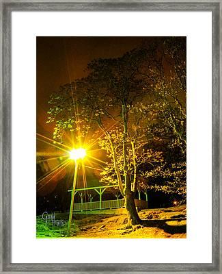 Tree Lights Framed Print by Glenn Feron