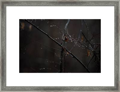 Tree Limb With Rain Drops 2 Framed Print