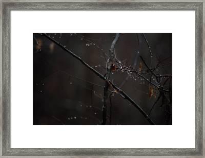 Tree Limb With Rain Drops 2 Framed Print