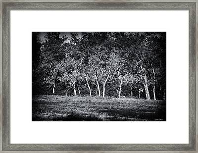 Tree Line In Autumn  Framed Print