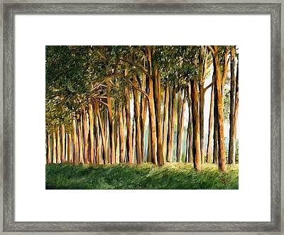 Tree Line Framed Print by James Shepherd