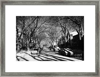 tree lined residential street in mid winter 4th ave Saskatoon Saskatchewan Canada Framed Print by Joe Fox