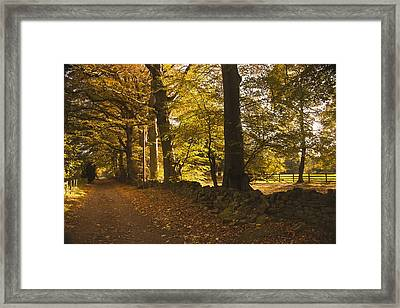 Tree Lined Road Covered With Fallen Framed Print by John Short