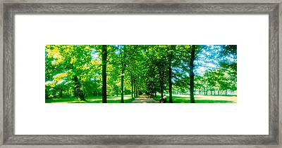 Tree-lined Road Dresden Vicinity Germany Framed Print by Panoramic Images