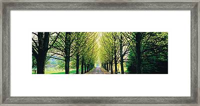 Tree-lined Road Libin Vicinity Belgium Framed Print by Panoramic Images