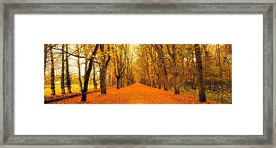 Tree-lined Road Loire Chenonceaux France Framed Print by Panoramic Images