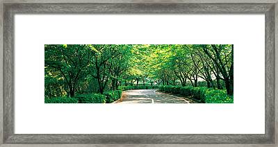 Tree Lined Road Osaka Shijonawate Japan Framed Print by Panoramic Images