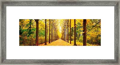Tree-lined Road Schwetzingen Germany Framed Print