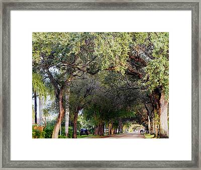 Tree Lined Street In Florida Framed Print by Debb Starr