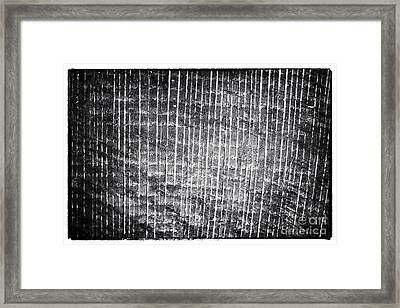 Tree Lines Framed Print by John Rizzuto