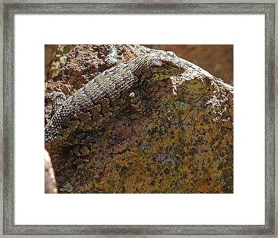 Tree Lizard Framed Print