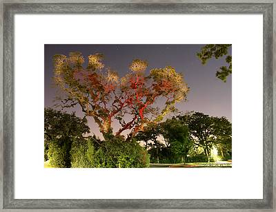 Tree Love Framed Print