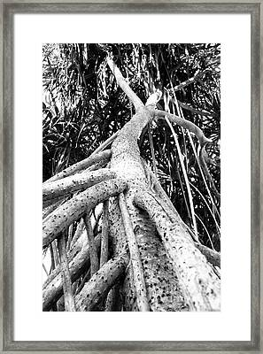 Tree Man Framed Print by Eyzen M Kim
