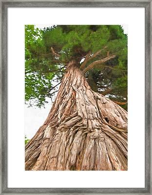 Tree Mass Framed Print by Marion Johnson