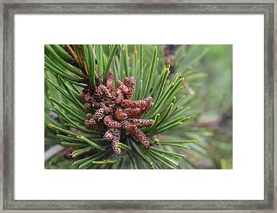 Tree Me Framed Print by Sheldon Blackwell