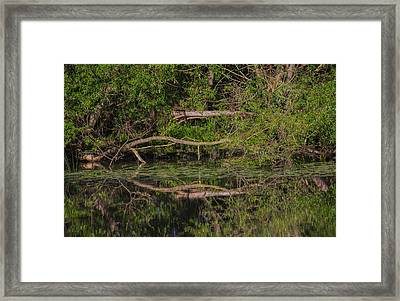 Framed Print featuring the photograph Tree Mirroring In Water by Leif Sohlman