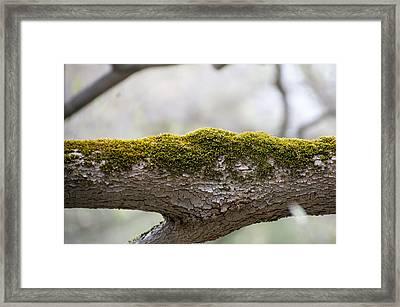 Tree Moss Framed Print by Mark Holden