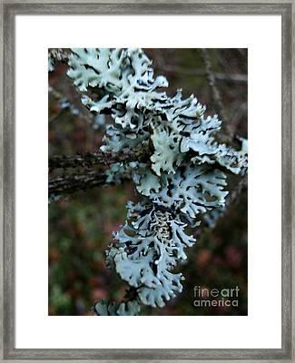 Tree Moss Framed Print by Steven Valkenberg