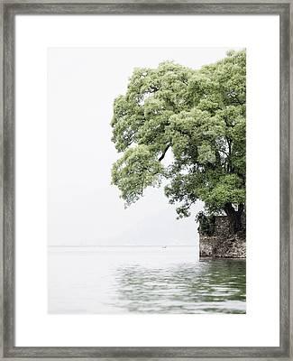Tree Next To A Lake Framed Print