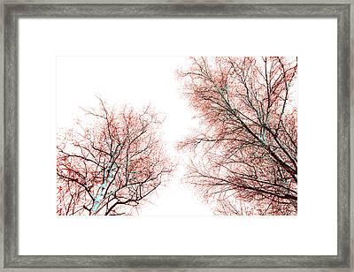 Tree Framed Print by Nina Peterka