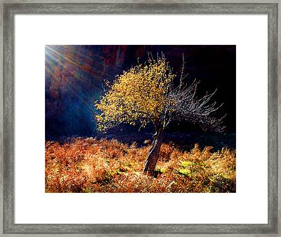 Tree Number 1 Framed Print