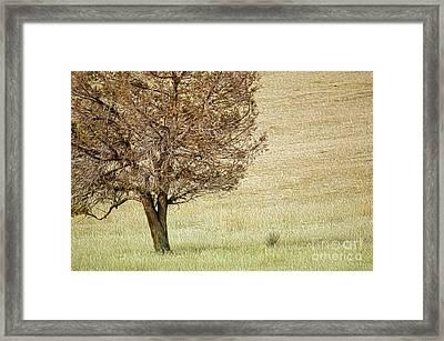 Tree Framed Print by Nur Roy