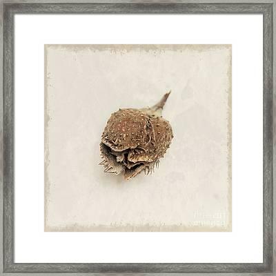 Tree Nut Framed Print by Lucid Mood