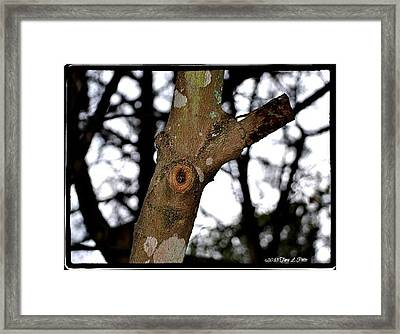 Framed Print featuring the photograph Tree Observation by Tara Potts