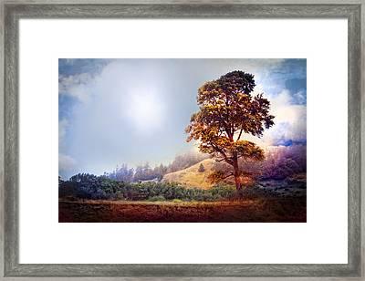 Tree Of Dreams Framed Print by Debra and Dave Vanderlaan