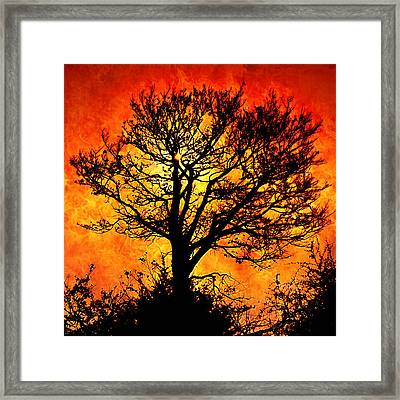Tree Of Fire Framed Print