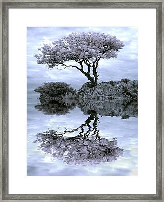 Tree Of Hope Framed Print by Thomas Berger