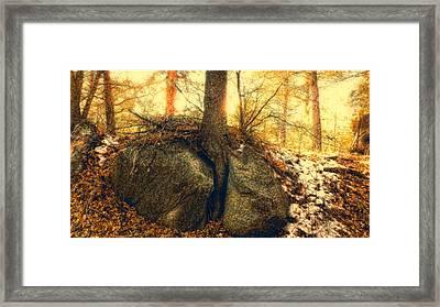 Tree Of Inspiration Framed Print