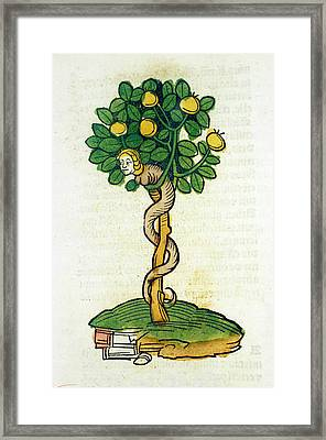 Tree Of Knowledge Framed Print by National Library Of Medicine