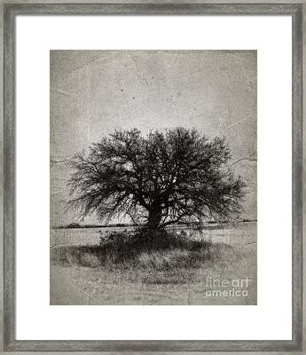 Tree Of Life - No.1958v Framed Print