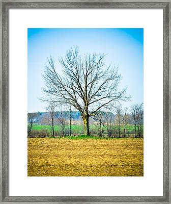 Tree Of Life Framed Print by BandC  Photography