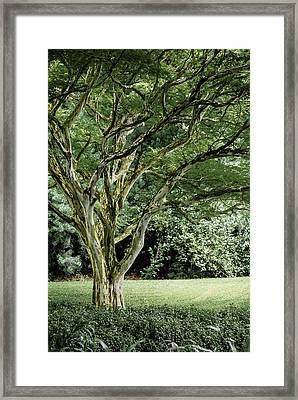 Tree Of Life Framed Print by Debbie Karnes